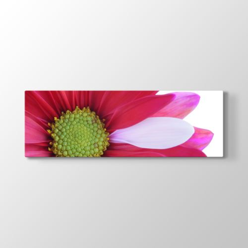 Tabloshop Flower Close Tablosu 120x40 cm