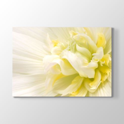 Tabloshop White Flower III Tablosu 90x60 cm