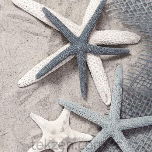 Zen Home Kanvas Tablo Deniz Yıldızı 40 X 40 X 2 Cm Tekzen