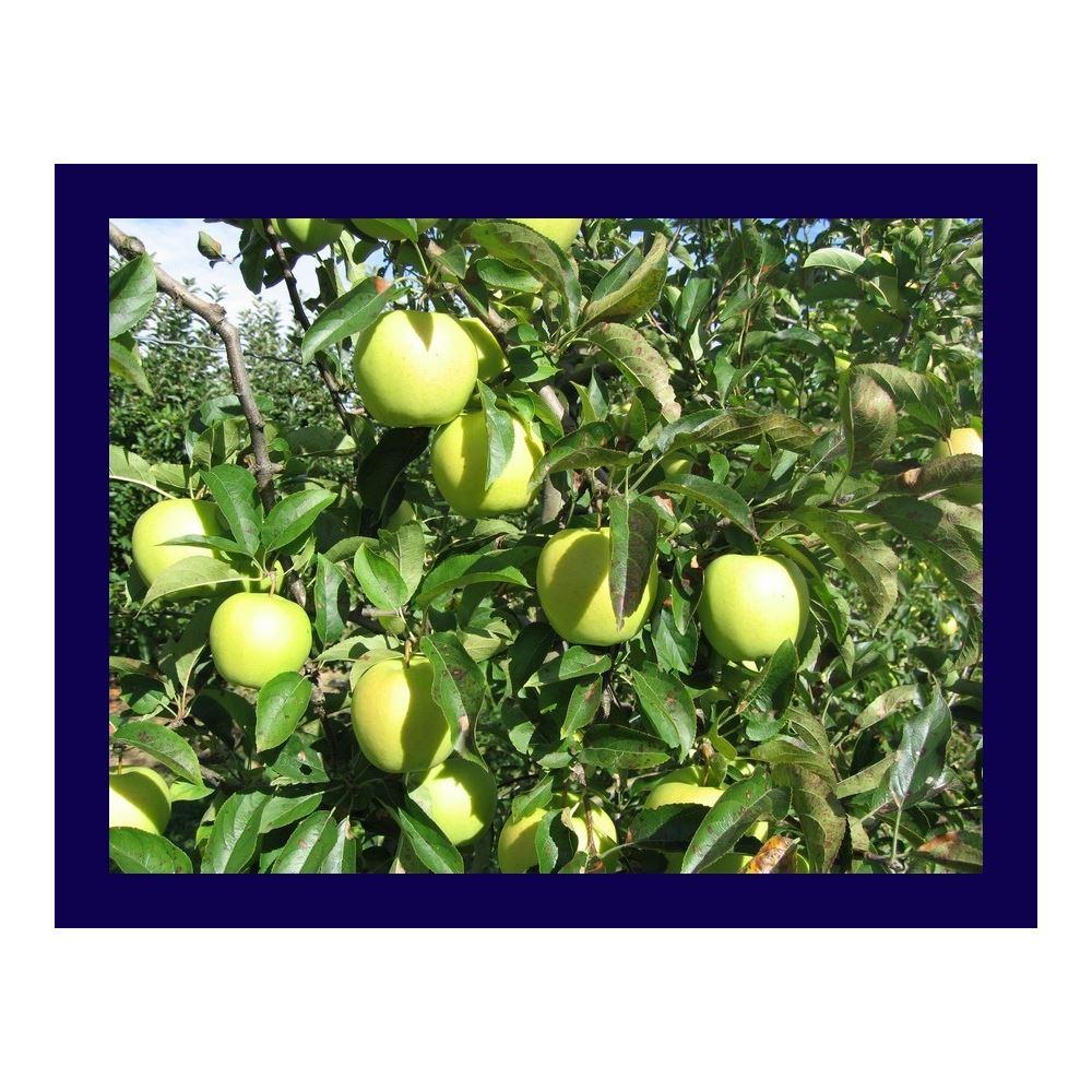 Sonbaharda elma ağaçları için gerekli gübreler